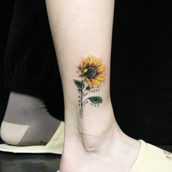 克拉玛依向日葵